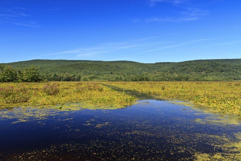 Basha Kill Wetlands, NY