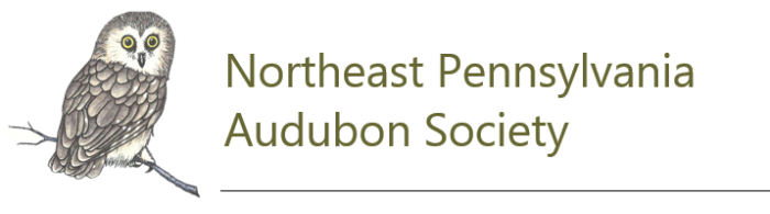NEPA Audubon Society Logo, a hand drawn Saw Whet owl, and the words Northeast Pennsylvania Audubon Society